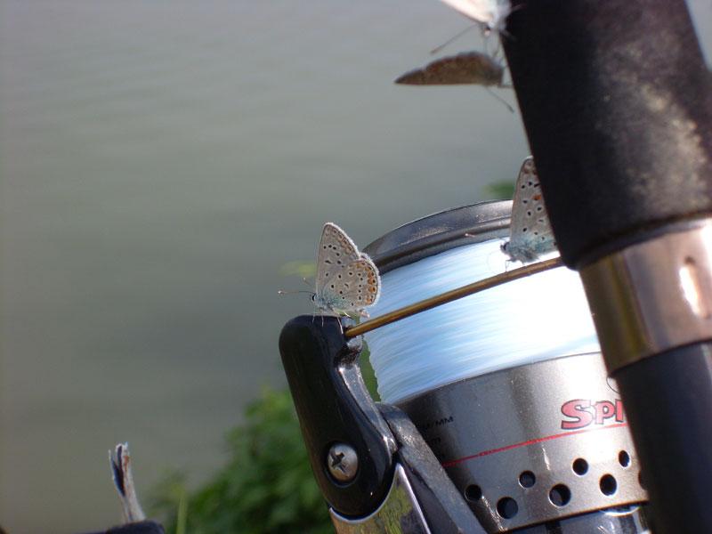 Una Caña de pescar
