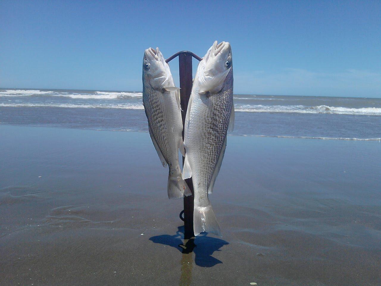 pesca 036